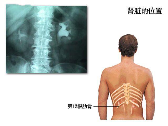 带脉的准确位置图 真人带脉的准确位置图 带脉位置图